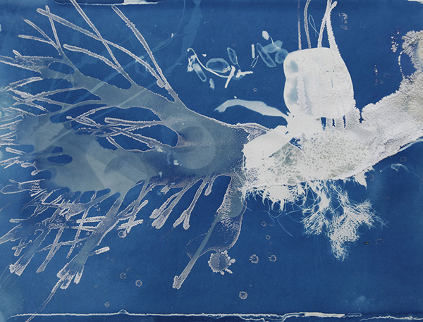 Christine Nguyen Submarine Branch, 2010 cyanotype and salt crystals on paper 15 x 20 inches