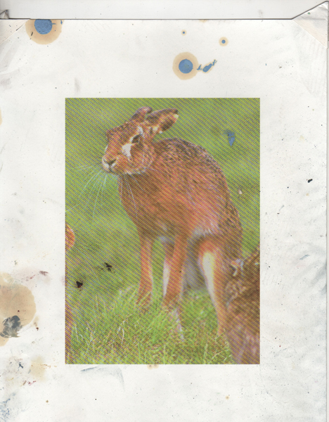 Jackrabbit Reference 2, 2010 collage