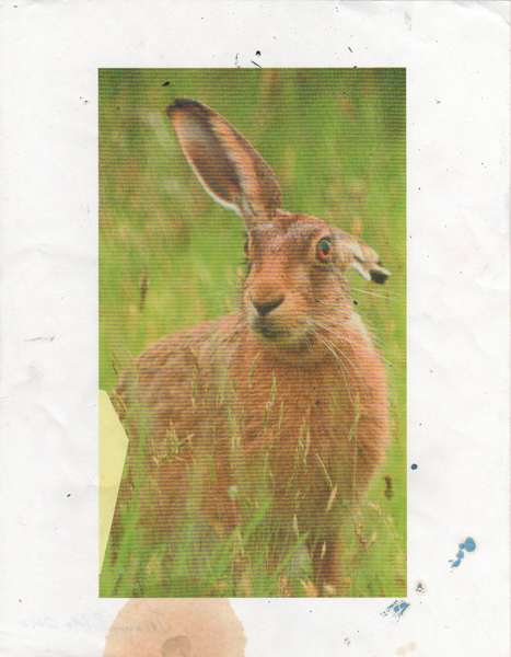 Jackrabbit Reference 3, 2010 collage