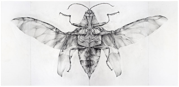 Jewel Beetle (Central View), 2007 pencil on paper, in four parts 44 x 90.5 inches