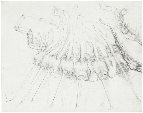 Hallucigenia, 2012 pencil on paper 10 x 13 1/2 inches